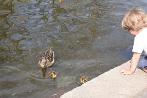 The Little Observer, Watching the Duck Family by Miss-Tbones
