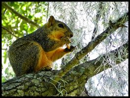 Hungry squirrel by MistressVampy