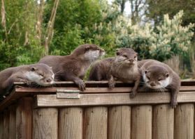 Otters by FreakshowFenner