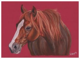 Horse 4 by Helenr251