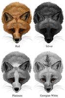 Domestic Fox Colors by hyperwires