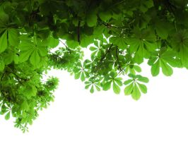 green leaves by grajcar