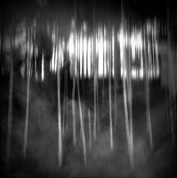 Birch Abstract by lostknightkg