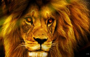 King Of The Jungle :Wallpaper: by LotusPodGFX