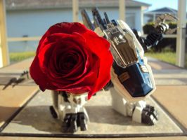 will you accept my rose by spartan049820