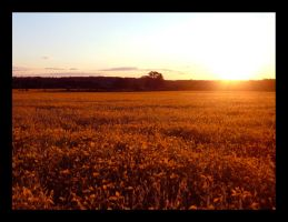Sea Of Gold III by TearsOfBlood943