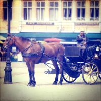 carriage. by fat-sheep2002