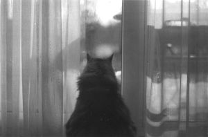 the outside by chat-de-gouttiere