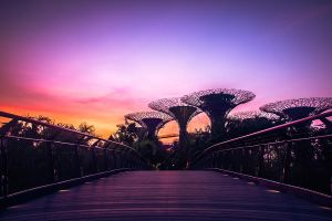 Gardens By The Bay - Bridge by DrakeXaos