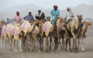 camel racing by cenevols