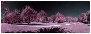 bandek_infrared_HDR by Q-harrr