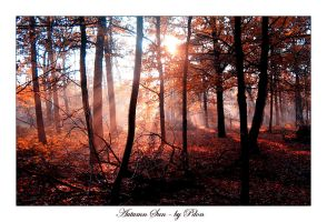 Autumn Sun by pdon