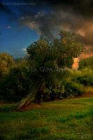 The Olive Tree by NTGreen
