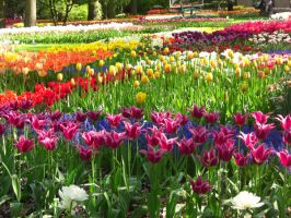 Another day in Keukenhof by tulipa7