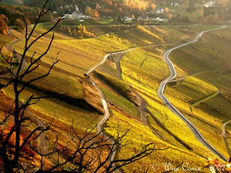 Golden winefields... by Wimley