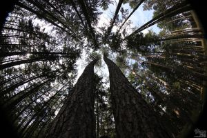 Fish eye - Forest by VeruPhotos