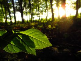 Lighted Leaves by Notandanavn