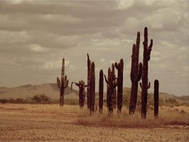 deserted Cactus by sonafoitova