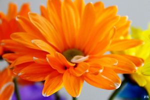 Birthday Flowers 10 by LifeThroughALens84