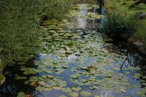 Lily pond by MihaelaJoeDesigns