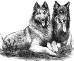 Dogs by Amarevia