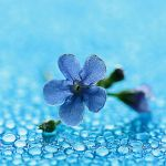 the blue note by Sandy515
