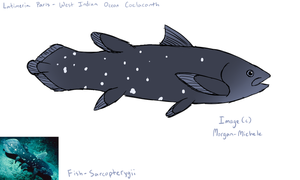 Fish - Sarcopterygii by Morgan-Michele