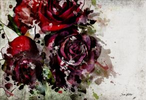 Roses by jhutter