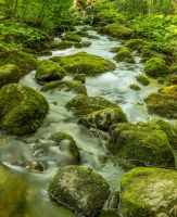Mossy Pathway by philipbrunner