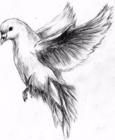 Quick sketch of dove by MaXymuSFM
