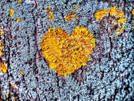 The heart of the tree by rhb4