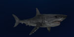 MMD Newcomer Great White Shark + DL by Valforwing
