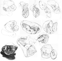Sketchdump3: Mushrooms by Nyka