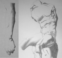Drawing body parts by COVipeanut