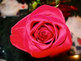 rose2 by lampshaded-stock