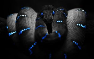 black_snake_hd_widescreen_wallpapersHD by afel7