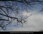 Tree 4-Stock by tempestazure-Stock