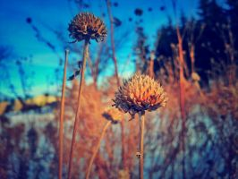 Prairie Winter Clover by BenRogersWPG
