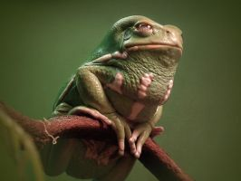 Waxy Monkey Frog by ktalbot