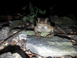 Toad 26Oct2014 2 by RiverKpocc