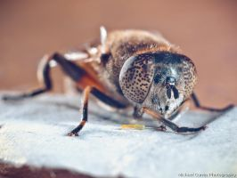 Bee - extension tube test II by TheSoftCollision