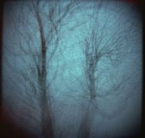 Trees by Dreams-Made-Flesh