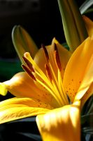 Mama Day Lily by egypt-rai