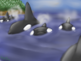 Orca Pod in the Mists by MsBeka