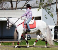 STOCK - 2014 Andalusian Nationals-169 by fillyrox