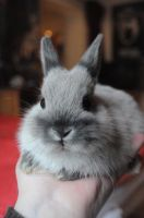 tiny bunny by blackeyedcreep