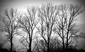 Trees by PascalsPhotography