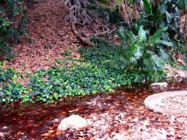 Leaves in Pond by abyss2213