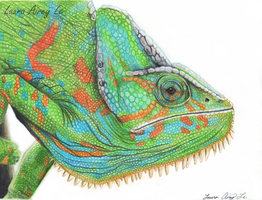 Veiled Chameleon Portrait by MorRokko