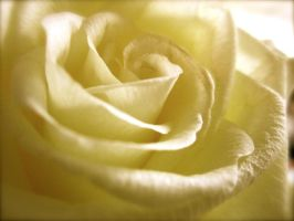 A White Rose by jareth1fan